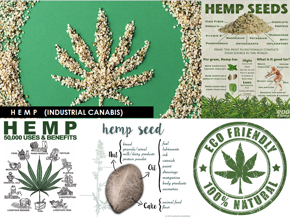 HEMP_DEFINITION_WAKEUP CUT