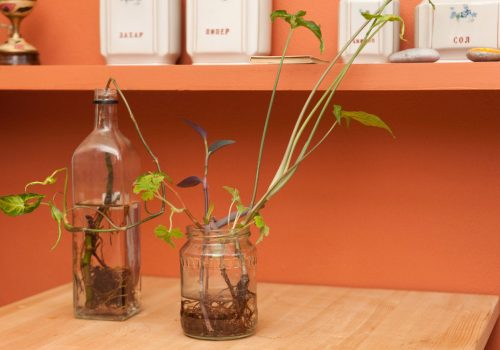 Food containers get into a new life cycle